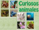 Curiosos animales