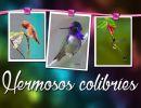 Hermosos colibríes