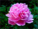 Felicidades con flores