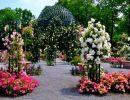 Peggy rockefeller rose garden USA