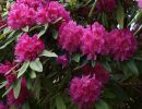 Rhododendron park bremen Germany