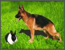 El conejo y el perro