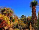 Ruth bancroft garden USA