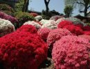 Japón en Primavera