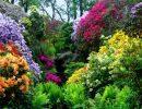 Dorothy clive garden england