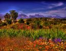 namaqualand namibia south africa