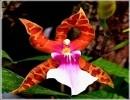 Orquídeas y colibríes