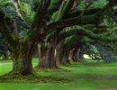 Louisiana Oak Alley Park
