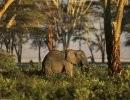 Parque Nacional de Ambroseli – Kenia