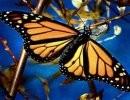 La Mariposa y El Hombre