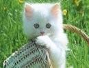 Decálogo del gato