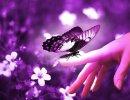 Pensamientos En Púrpura