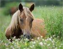 Historia del caballo