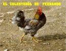 El Colesterol de Fernando