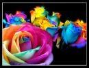 La Vida En Colores