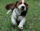 Amor al perro…