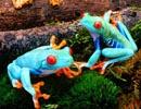 Colores en la naturaleza – Ranas