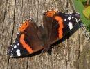 Colores en la naturaleza-Las mariposas
