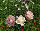 Rosas para ti Rosa María