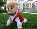 Un perro muy divertido – Segunda parte