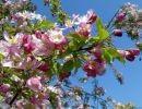 Primavera, amor y fantasía