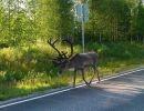 En Finlandia 1
