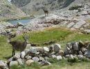 Una pequeña visita a La sierra de Gredos