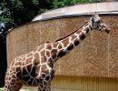 Un pequeño paseo por Baltimore zoo