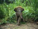 Divertidos elefantes 2
