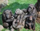 Un paseo por  el zoológico Bioparc – Valencia