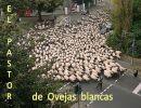El Pastor de ovejas blancas