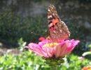 Mariposas en Galicia