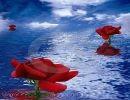 Rosas sobre el mar
